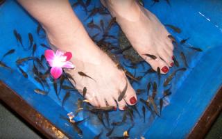 Пилинг рыбками ГАРРА РУФА: правда об экзотическом бизнесе